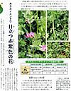 Kasumagusa_618x800