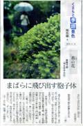 Kokenohana_422x640_2