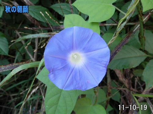 Akiasagao