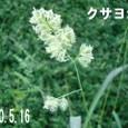 10516kusayosi